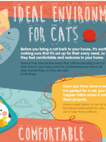 The Ideal Environment For Your Cat Infographic