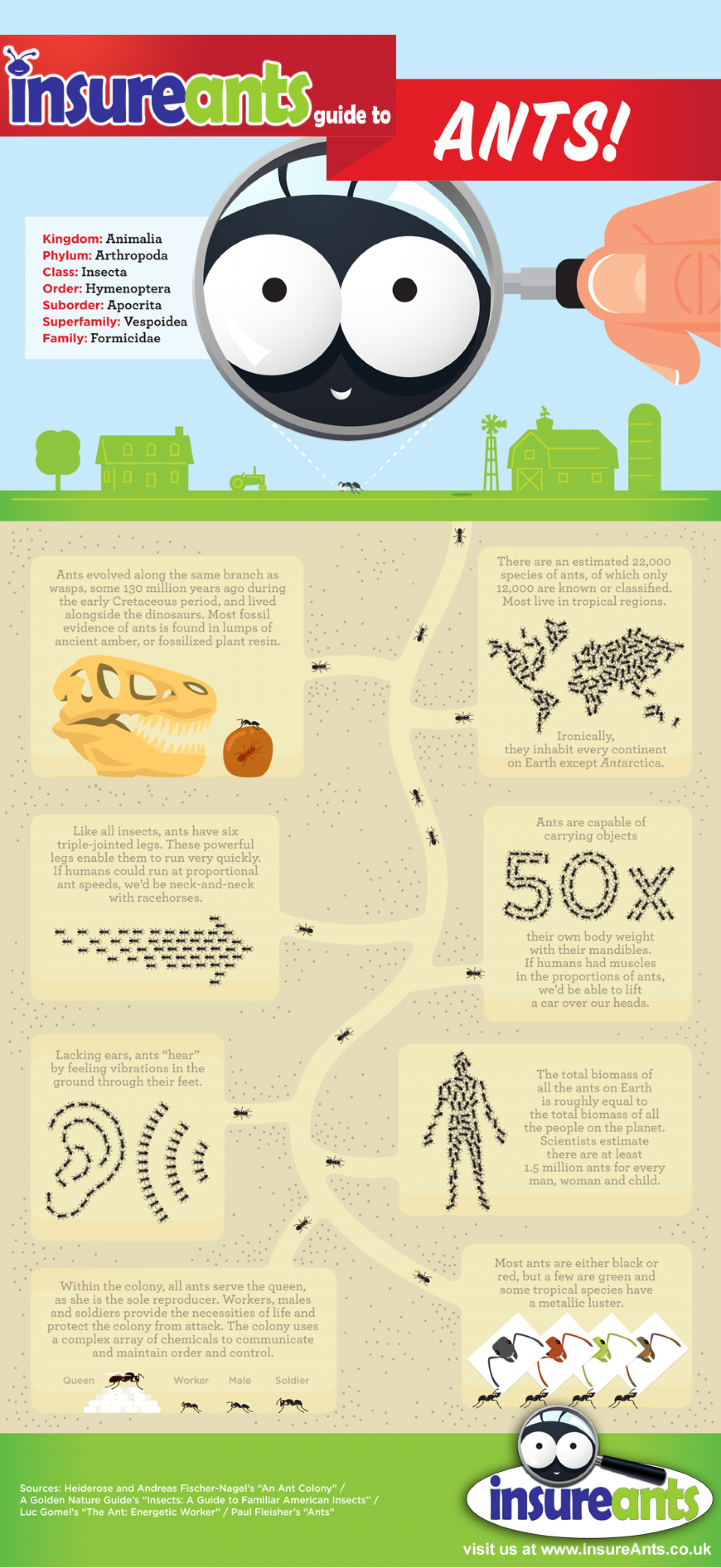 The InsureAnts Guide to Ant-Kind Infographic