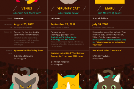 The Internet Of Cats Infographic