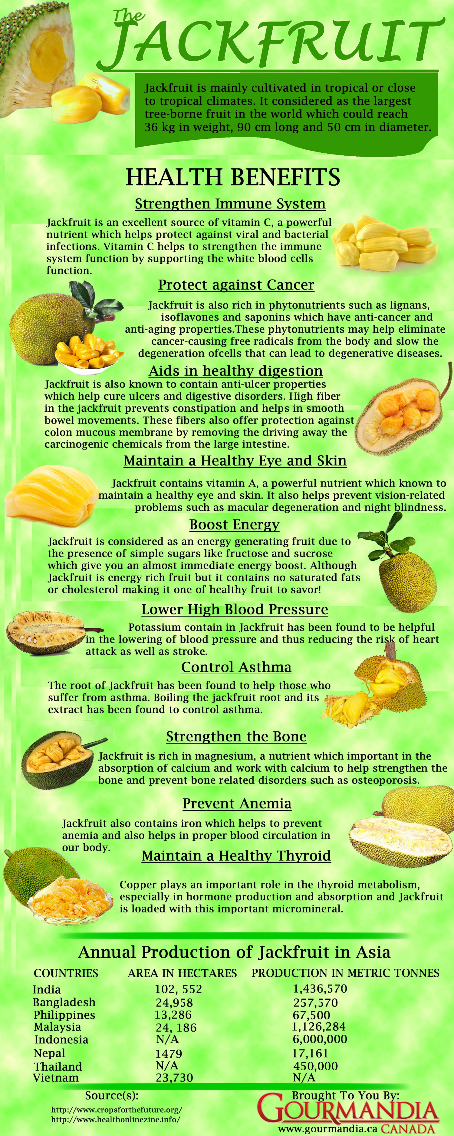 The Jackfruit Infographic
