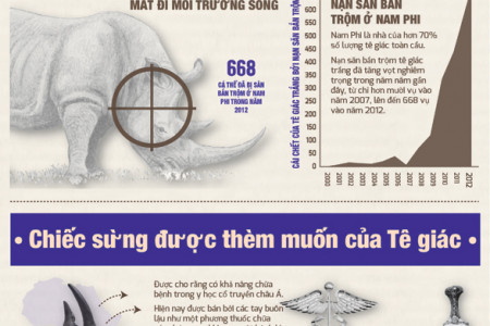 The last rhinoceros (in Vietnamese) Infographic