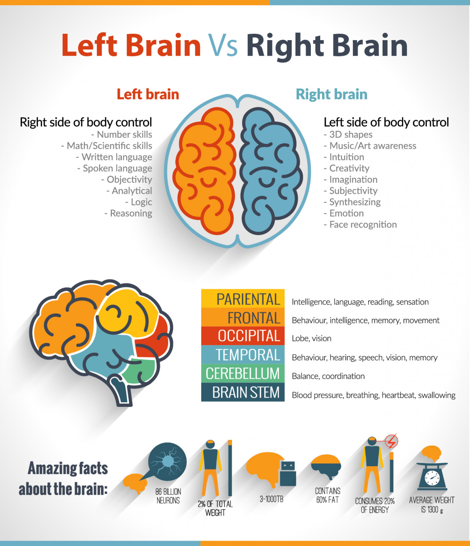 The Left Brain Vs Right Brain Confusion Infographic