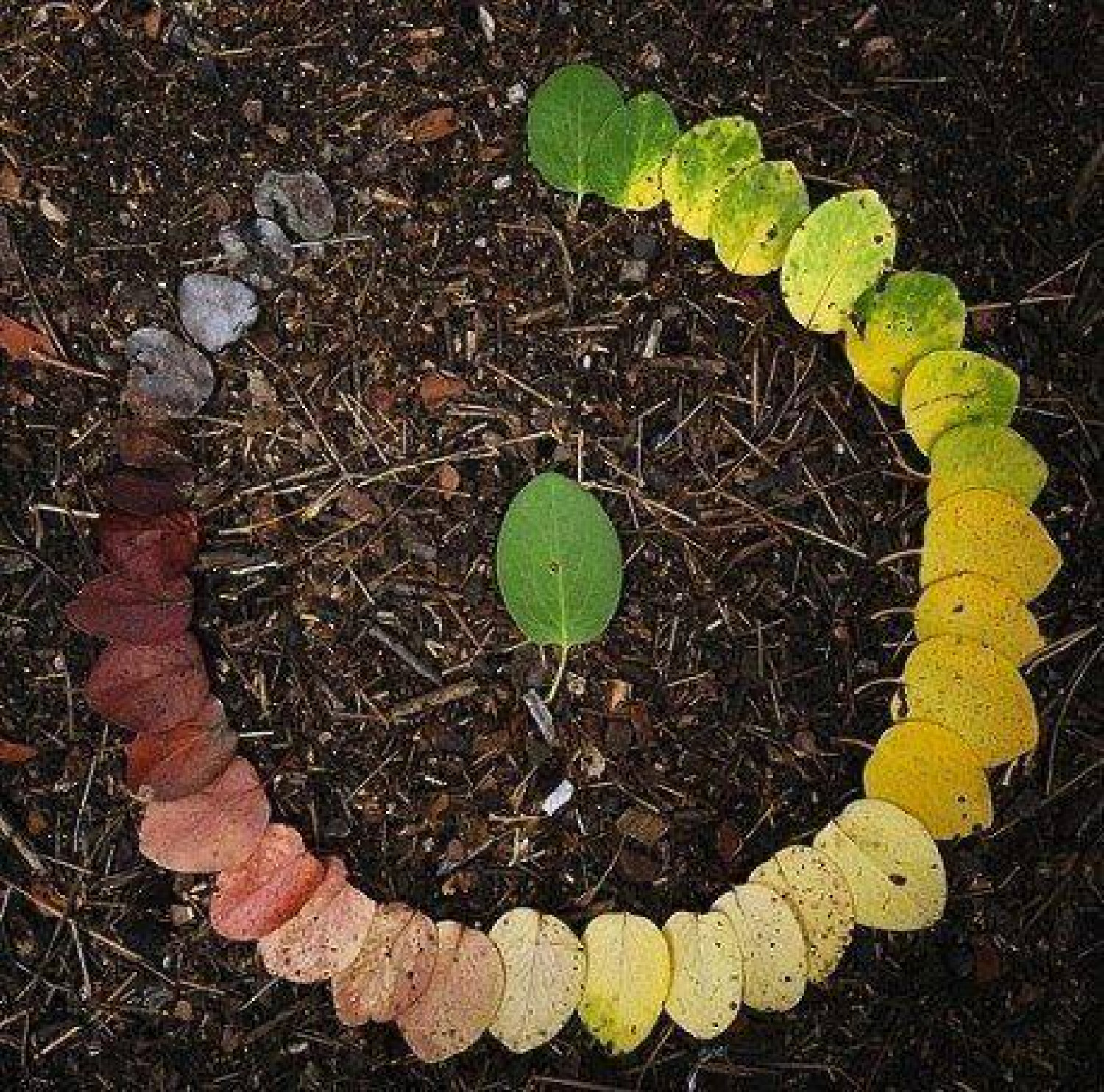 The Life Cycle of a Leaf Infographic