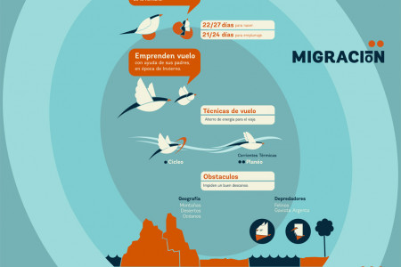 The Life Is A Trip; Arctic Charran Migration Infographic