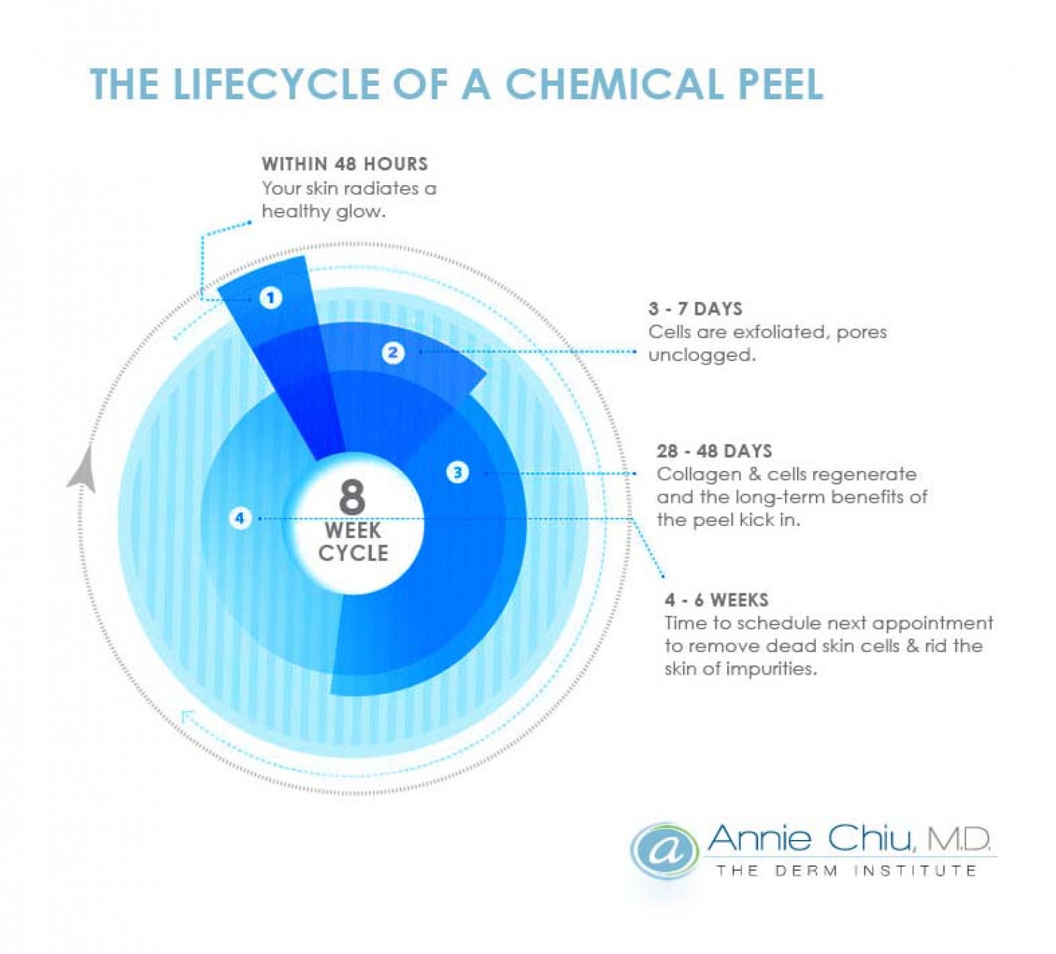 The Lifecycle of a Chemical Peel  Infographic