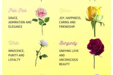 The Meaning of Rose Colors Infographic
