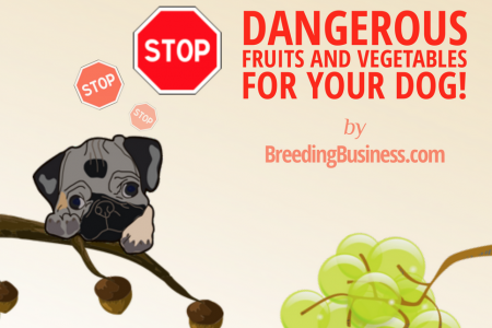 The Most Dangerous Fruits & Vegetables For Dogs Infographic