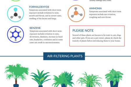 The NASA Guide to Air-filtering Houseplants Infographic
