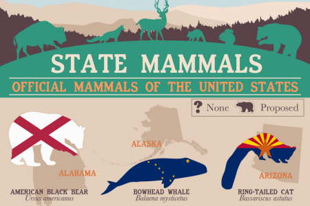The Official State Mammals of the United States Infographic