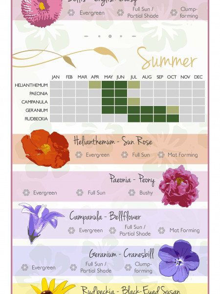 The Perfect Guide To Keeping Your Garden In Bloom All Year Round Infographic