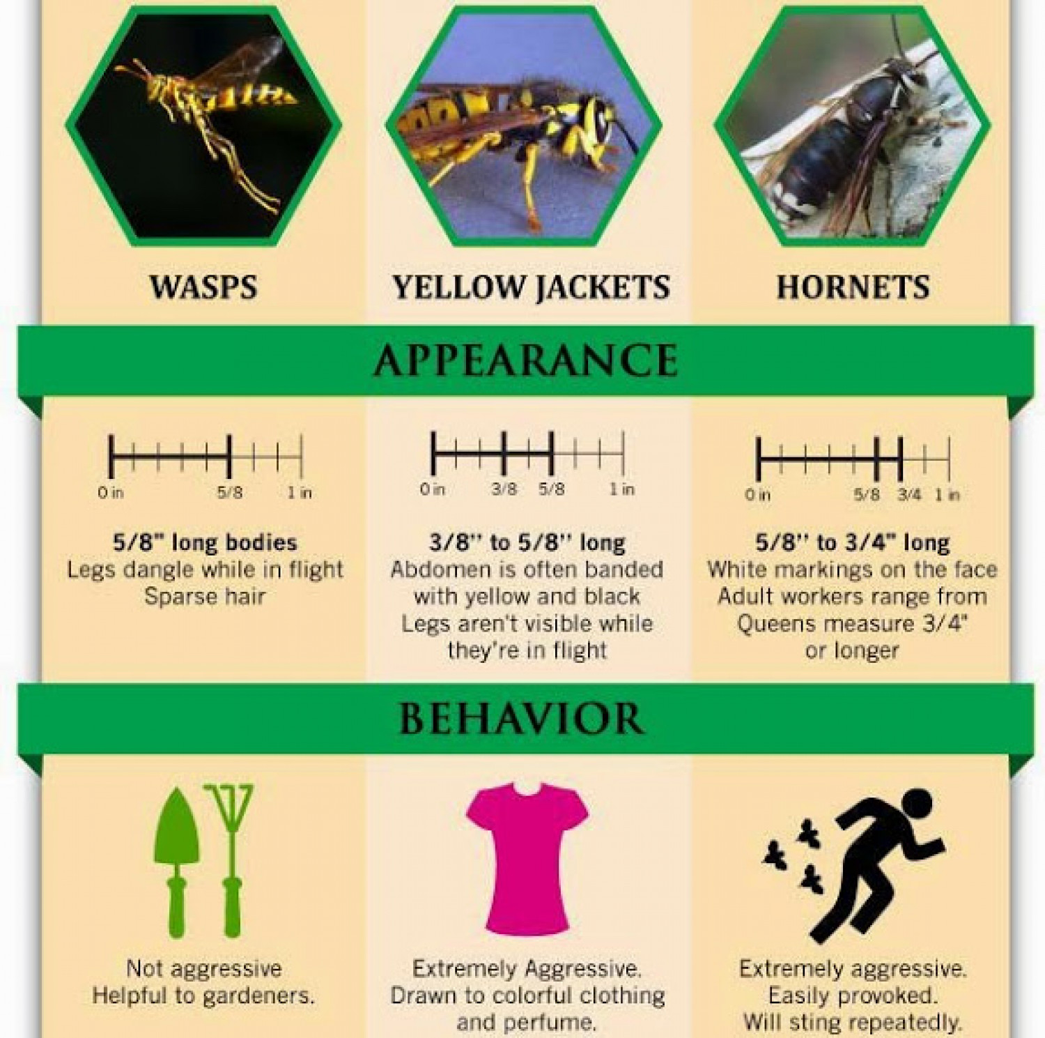 The Proper Way to Handle Wasps and Bees Infographic