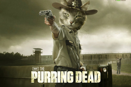 The Purring Dead Infographic