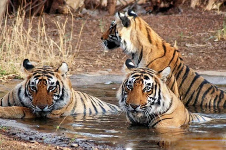 The Ranthambore National Park With | Trekwalks Infographic
