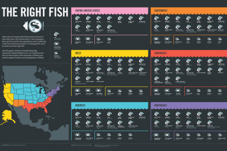 The Right Fish Infographic
