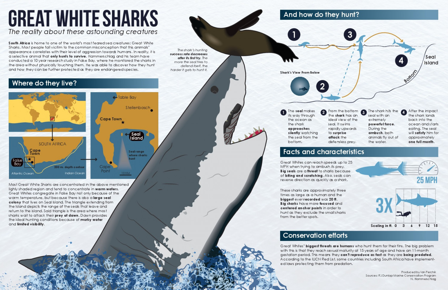 The Science Behind Great White Shark Predation | Visual.ly for Great White Shark Diagram  55jwn