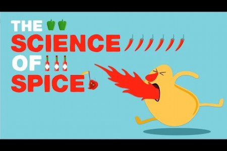 The Science of Spiciness Infographic