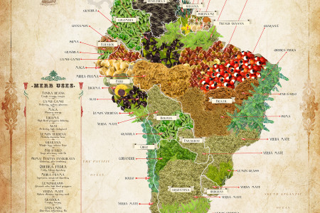 The South American Herb Map Infographic