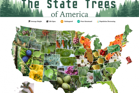The State Trees of America Infographic
