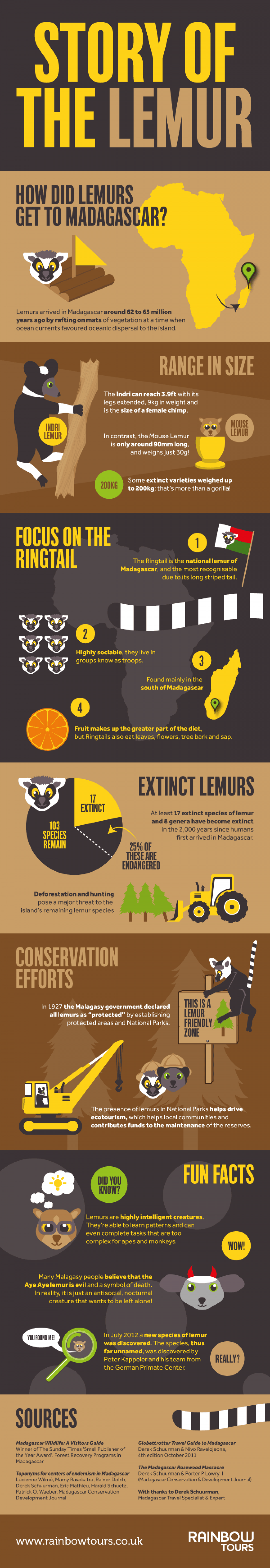 The Story of the Lemur Infographic