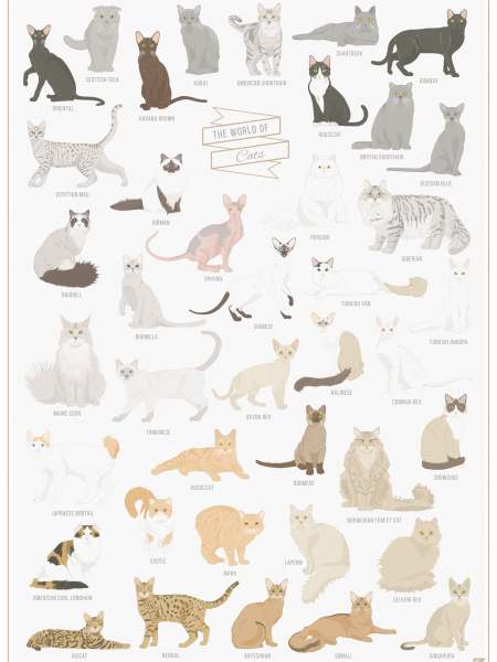 The World of Cats  Infographic