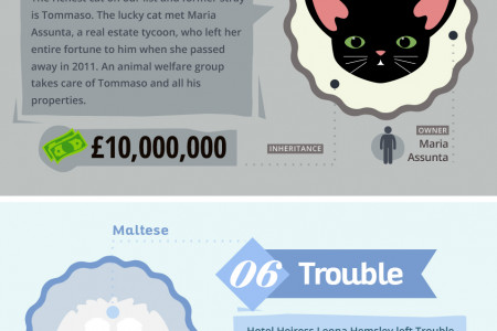 The World's Richest Pets Infographic