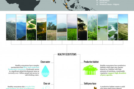 Tigers, Forests & People Infographic