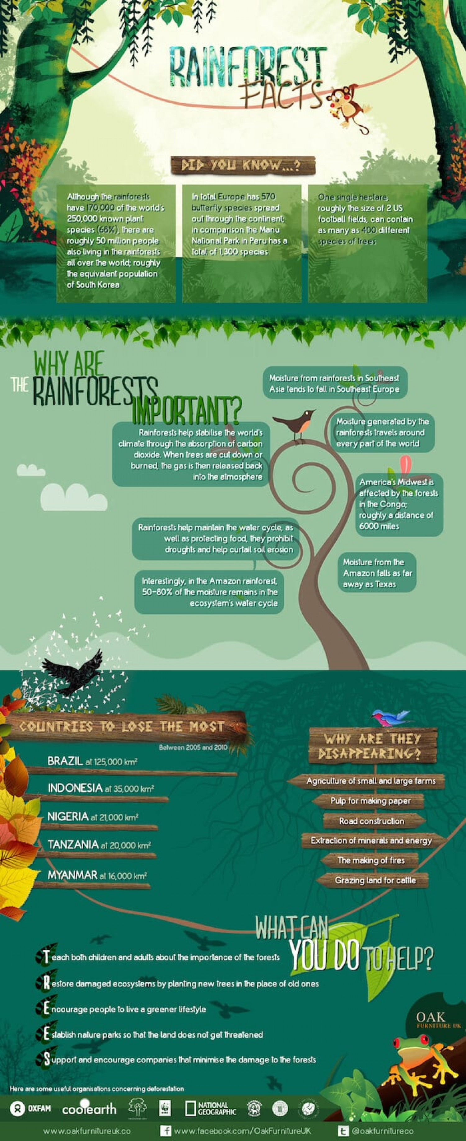 Time to Learn a Few Rainforest Facts Infographic