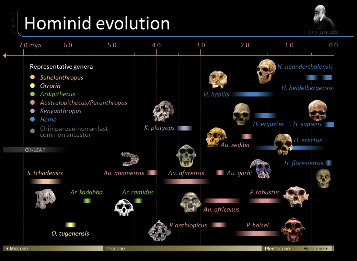 Hominid Evolution Timeline Timeline of hom...