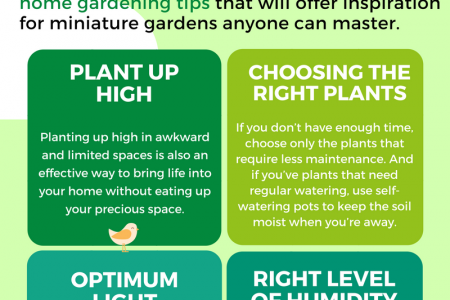 Tips for Indoor Home Gardening Infographic