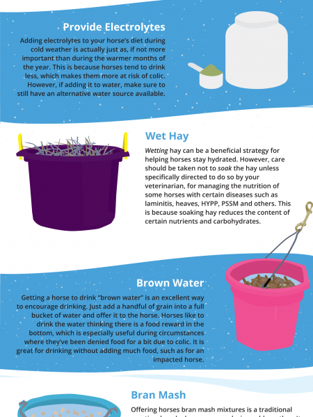 Tips for Keeping Horses Drinking Water During the Cold Weather Infographic