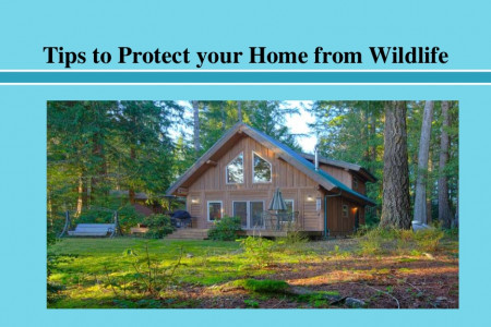 Tips to Protect your Home from Wildlife Infographic