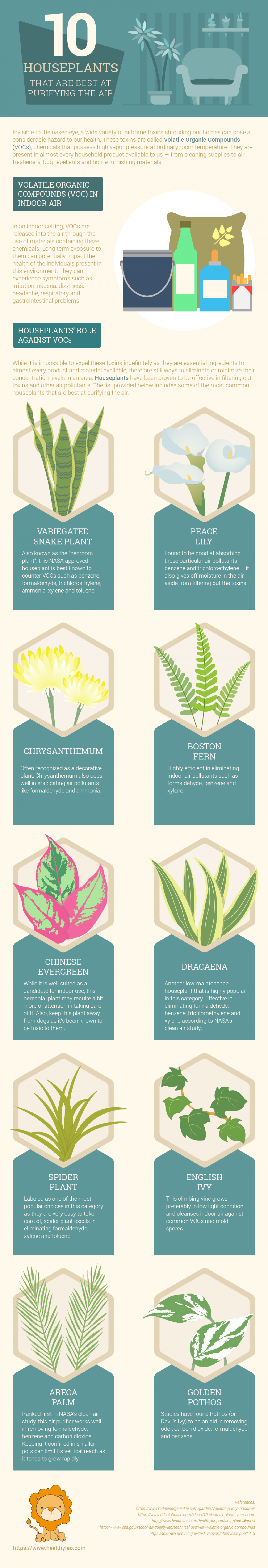 Top 10 Houseplants for Purifying the Air Infographic