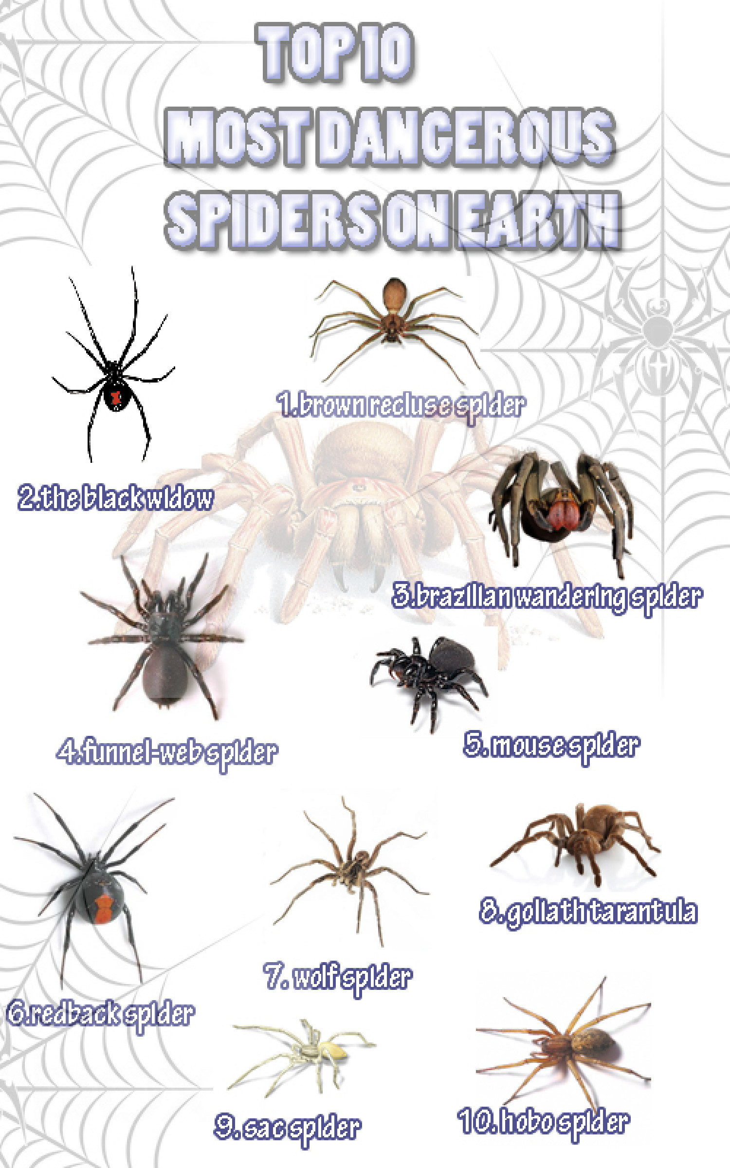 Top 10 Most Dangerous Spiders On Earth Infographic