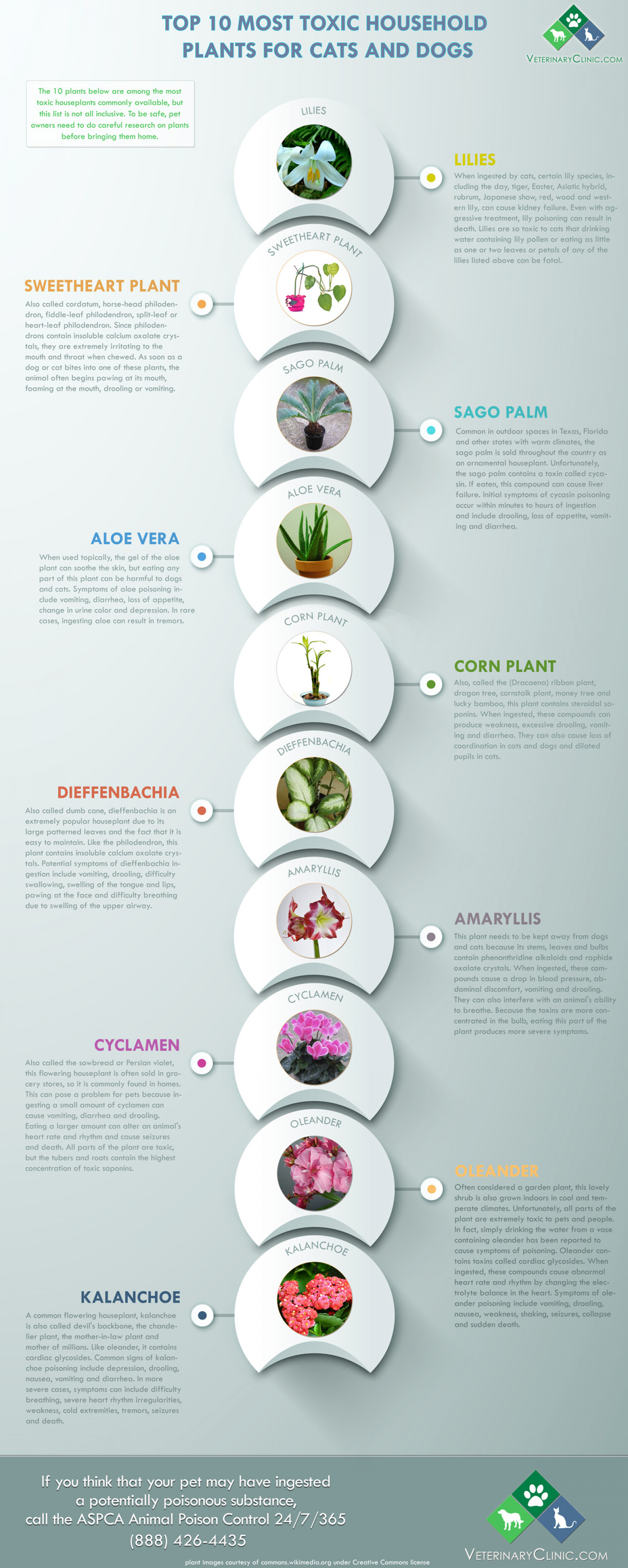 Top 10 Most Toxic Household Plants for Pets Infographic