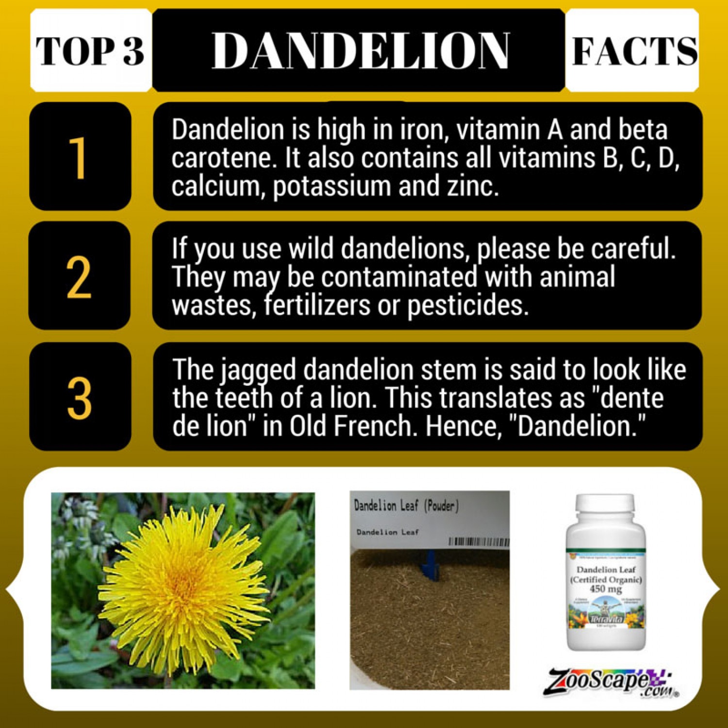 Top 3 Facts about Dandelion Infographic