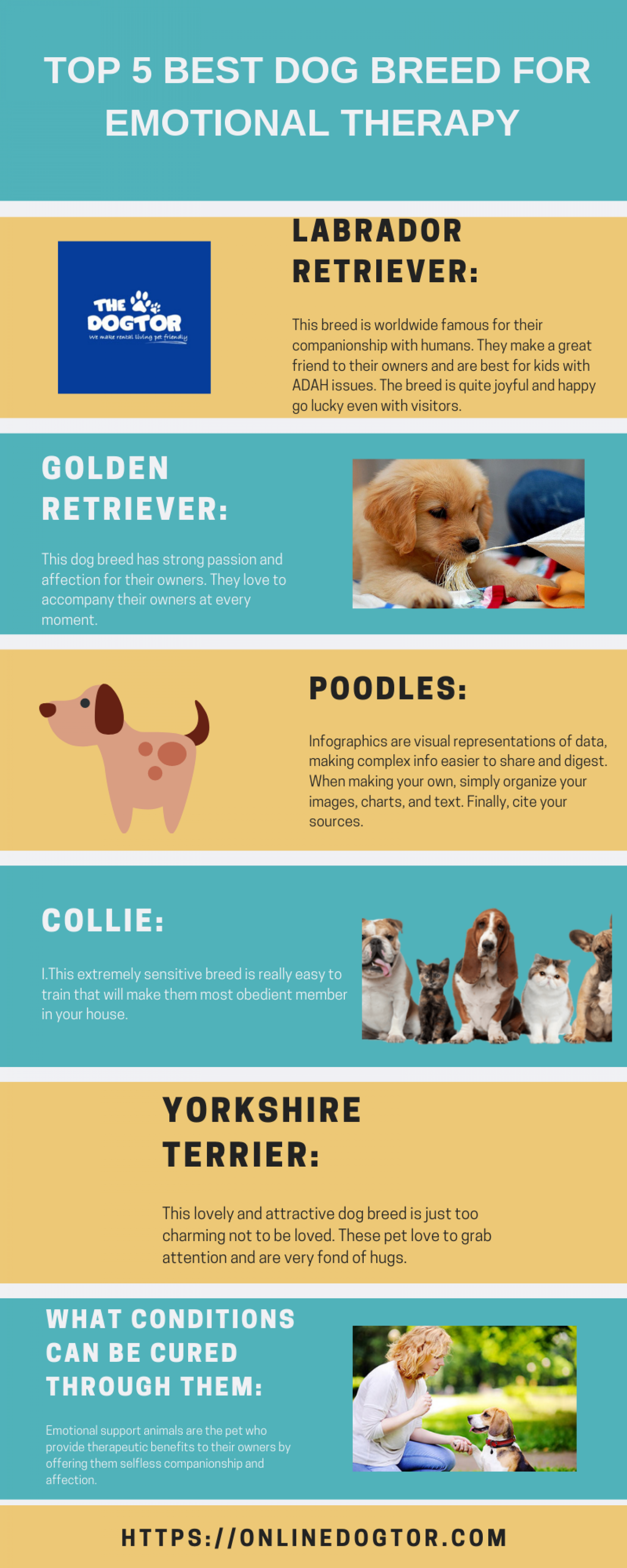 TOP 5 DOG BREED FOR EMOTIONAL THERAPY Infographic