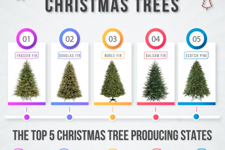 Top 5 Most popular Christmas Trees Infographic