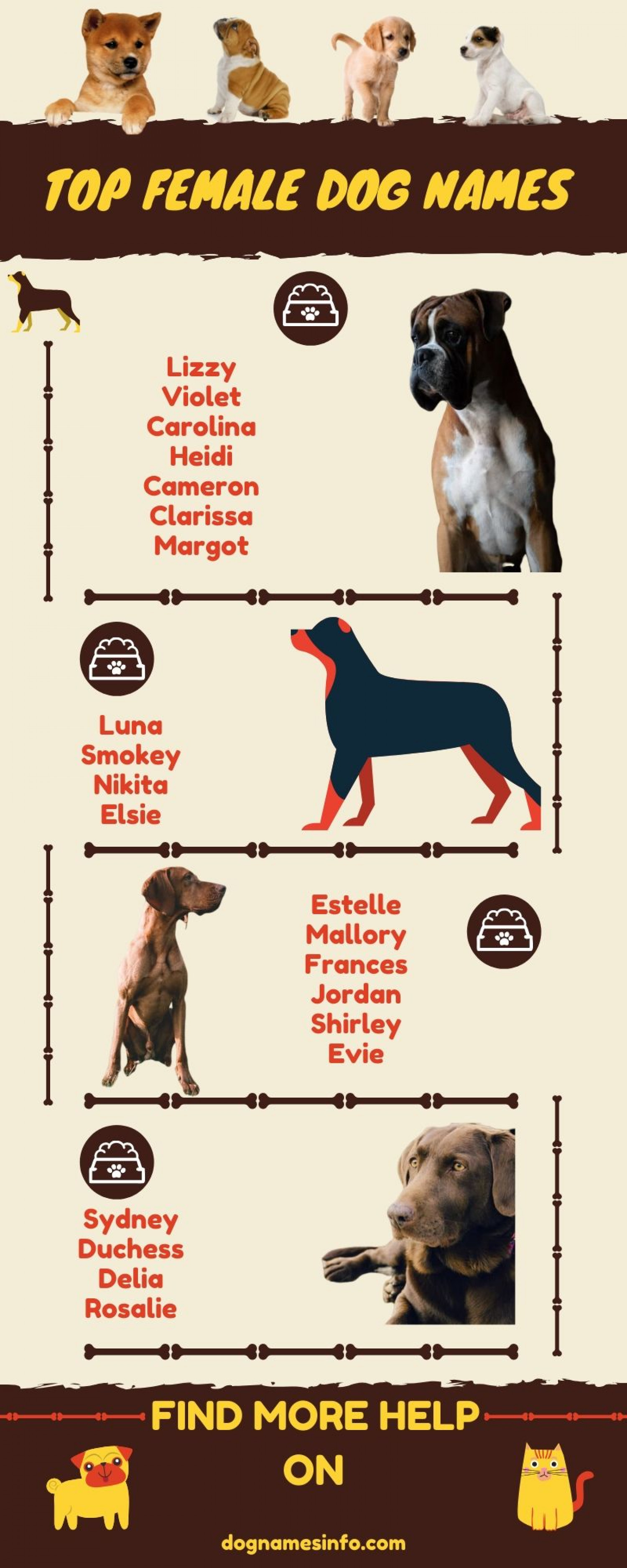 Top Female Dog Names Infographic