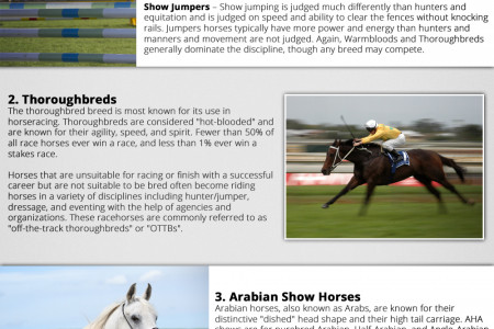 Top Horse Breeds and Disciplines Defined Infographic