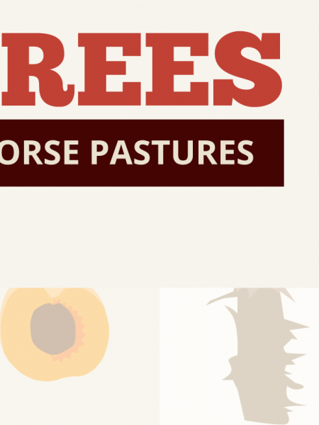 Toxic Trees that Shouldn't be in Horse Pastures Infographic