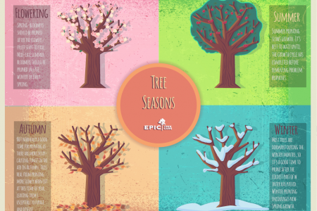 Tree Care Seasonal Tips Infographic