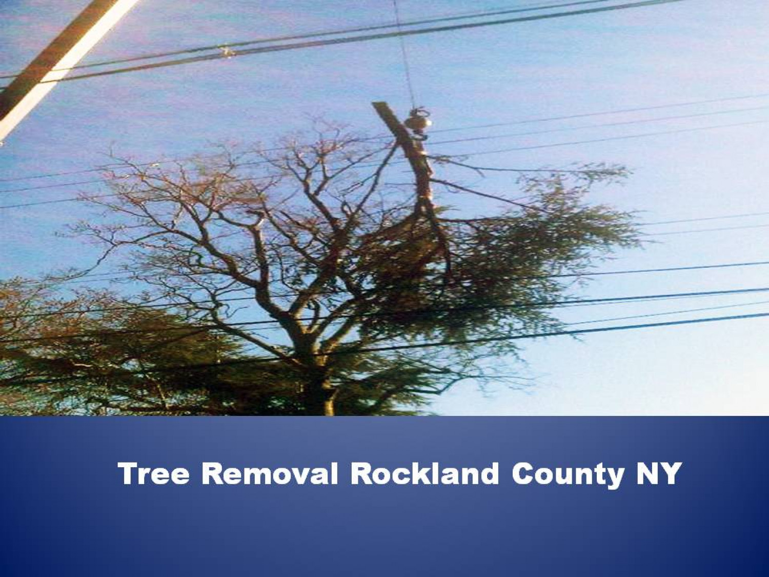 Tree Removal Rockland County NY Infographic