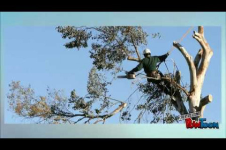 Tree Removal Services - Tips and Reasons Why the Investment is Worth It Infographic