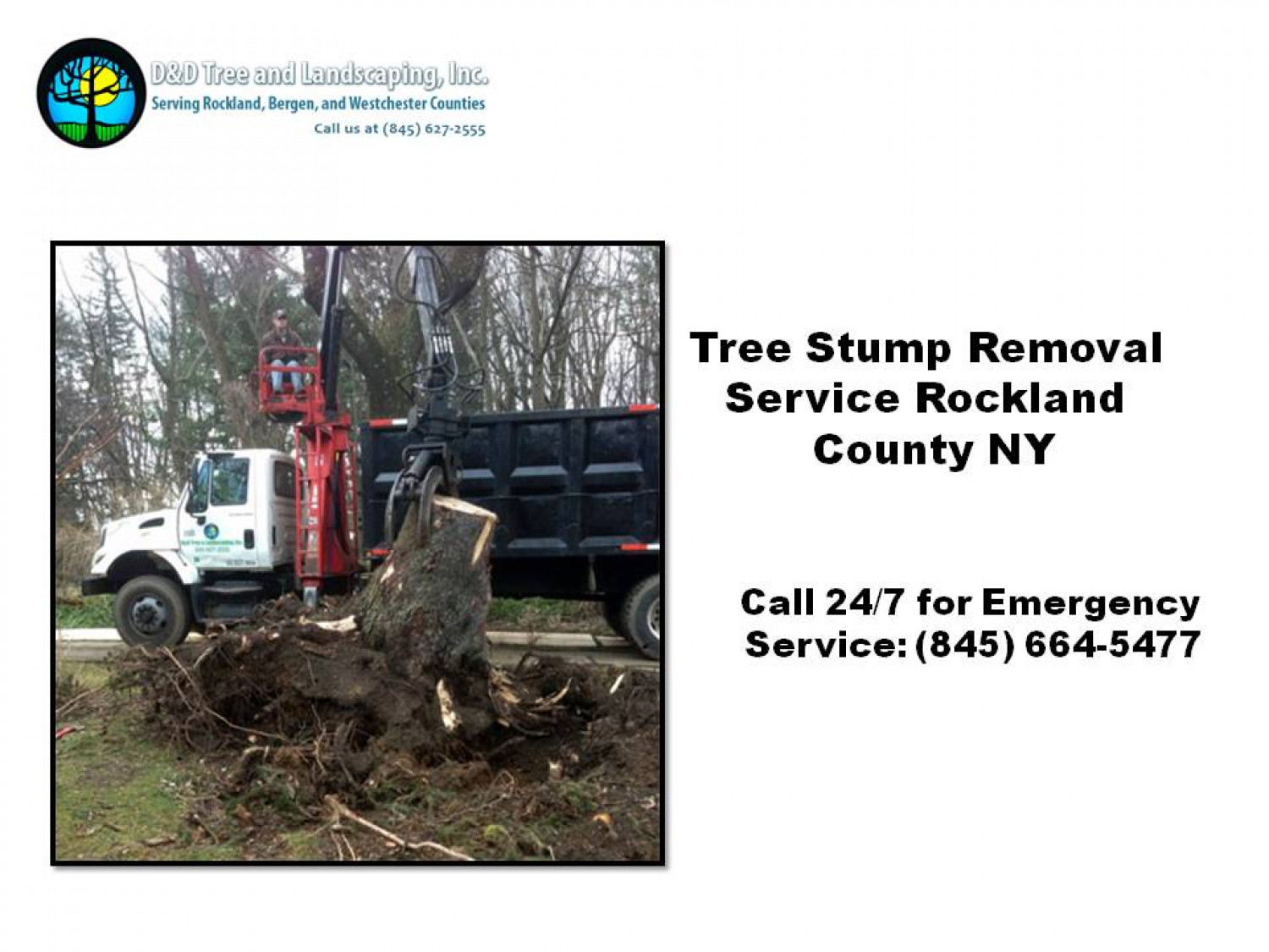 Tree Stump Removal Service Rockland County NY Infographic