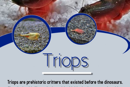 Triops Infographic