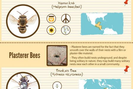Types of Bees, Hornets, and Wasps Around The World Infographic