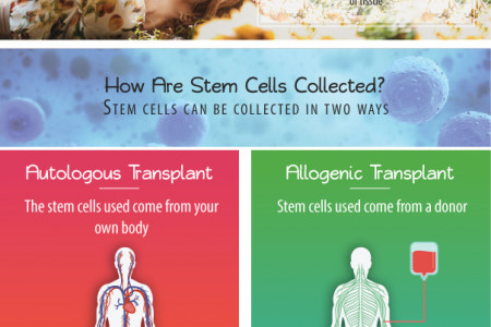 Types of stem cells Infographic