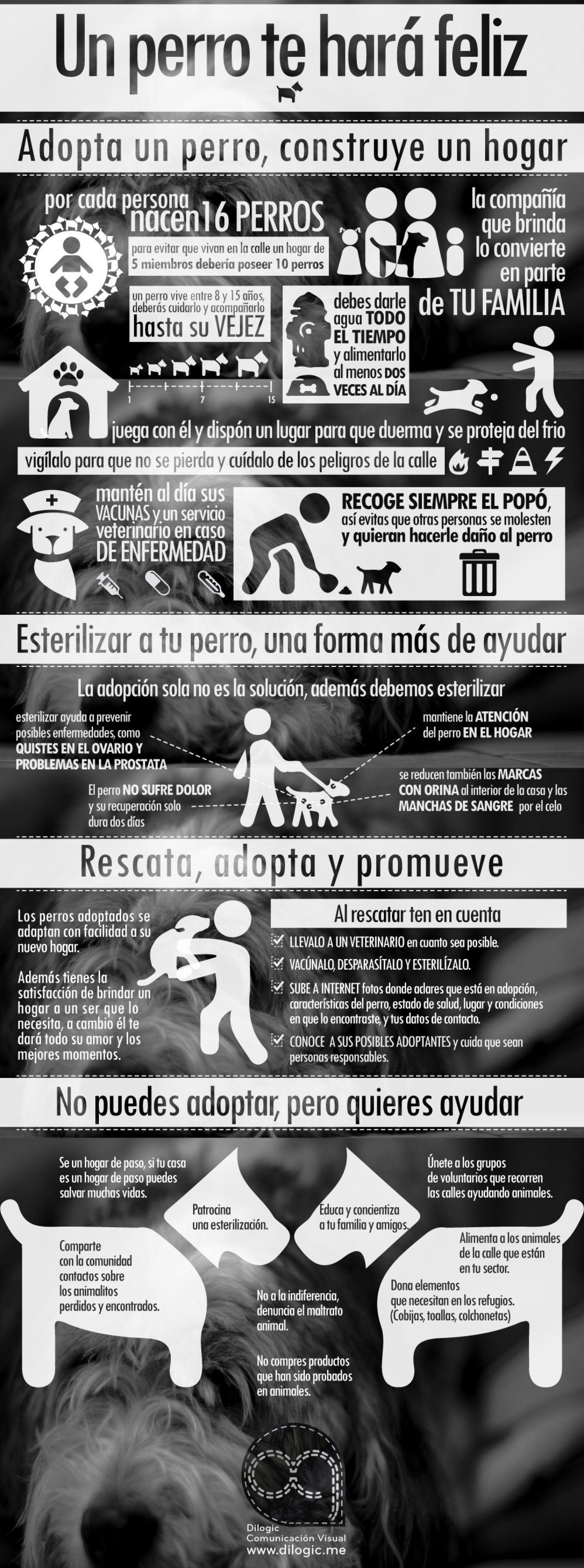 Un perro te hará feliz / A dog will make you happy Infographic