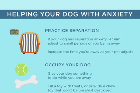 Understanding Anxiety in Your Dog  Infographic