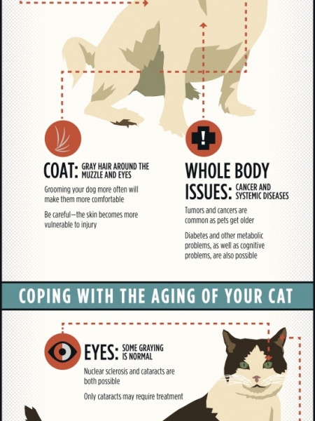 Understanding Your Pet's Aging Process  Infographic